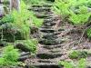 Grosse Kanzel Nationalpark Bayerischer Wald
