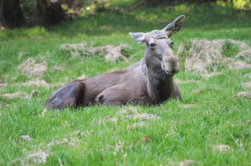 Tierfreigelände im Nationalparkzentrum Lusen