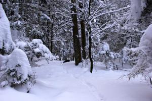Winter Wandern Bayerischer Wald
