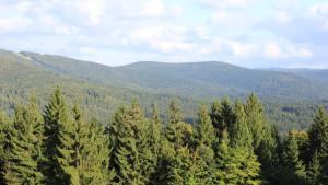 Waldmeer Nationalpark Bayerischer Wald