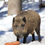 Tierfreigelände Nationalpark Bayerischer Wald