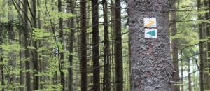 Goldsteig Bayerischer Wald