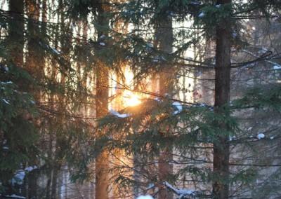 Winter Bayerischer Wald