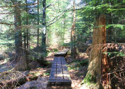 Bayerischer Wald Nationalpark Seelensteig
