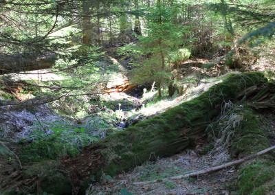 Seelensteig Themenwanderweg Bayerischer Wald