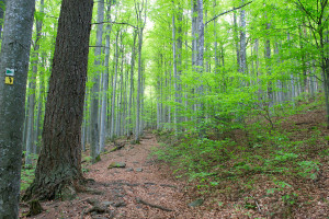 Wandern Nationalpark Bayern
