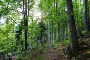 Wandern Bayerischer Wald Nationalpark