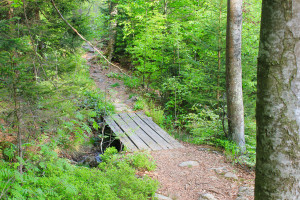 Nationalpark Bayerischer Wald Wandern Rachel