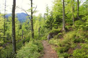 Wandern Bayerischer Wald Rachel Berg