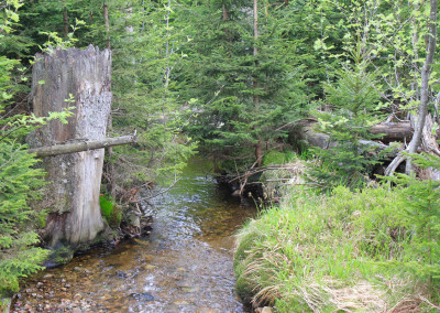 Wandern Nationalpark Bayerischer Wald Rachel