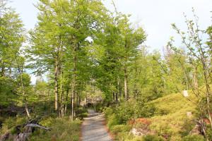 Wandern Rachelsee Bayerischer Wald