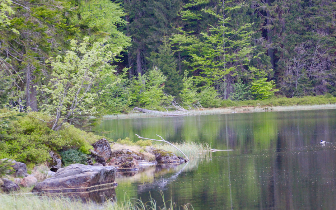 Zum Rachelsee