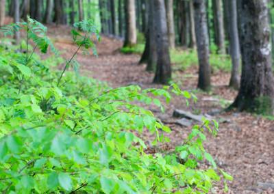Wandern Rachel Nationalpark Bayerischer Wald