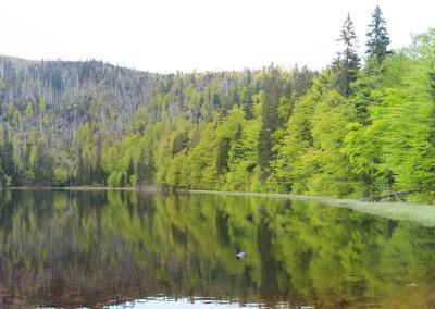 Rachelsee Nationalpark Bayerischer Wald