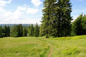 Hochschachten Bayerischer Wald