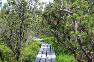 Wanderung Bayerischer Wald Schachten Filze