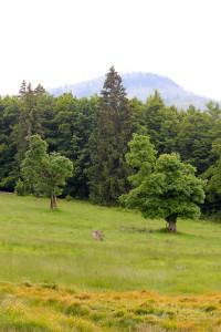 Wanderung Schachten Bayerischer Wald