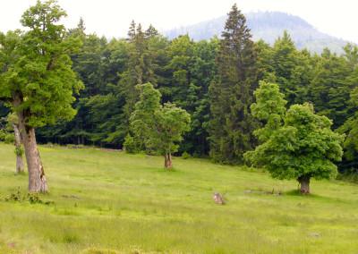 Schachtenwanderung Almschachten Bayerischer Wald
