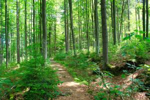 Schachtenwanderung im Bayerischen Wald