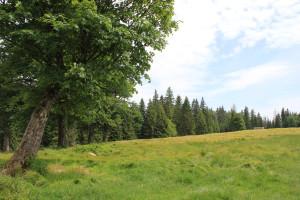 Verlorener Schachten Bayerischer Wald