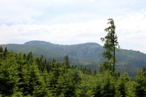 Wandern Bayerischer Wald Schachten Rachelblick