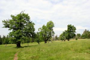 Schachtenwanderung Bayerischer Wald Almschachten
