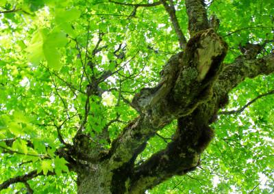 Schachtenwanderung Nationalpark Bayerischer Wald