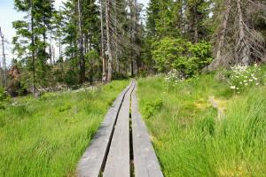 Wandern Bayerischer Wald Hochschachten