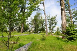 Wanderung Bayerischer Wald Nationalpark