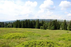 Hochschachten Nationalpark Bayerischer Wald