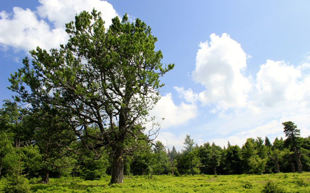 Schachtenwanderung im Nationalpark Bayerischer Wald