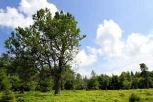 Hochschachten Wanderung Bayerischer Wald