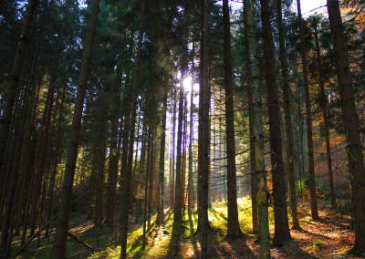 Herbst im Bayerwald