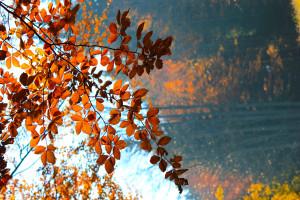 Bayerischer Wald Wandern im Herbst