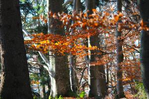 Bayerwald Herbst Wandern