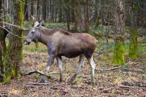 Wandern im Bayerischen Wald Herbst
