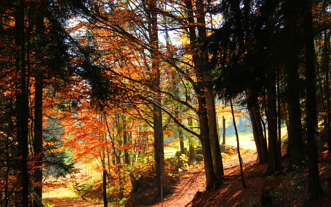 Herbst Wandern im Bayerischen Wald