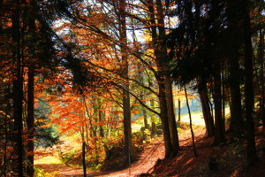 Wandern im Herbst im Nationalpark Bayerischer Wald