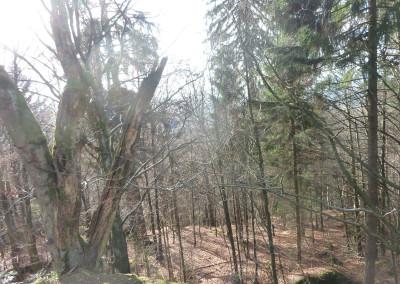 Wandern Schönbuchetfelsen