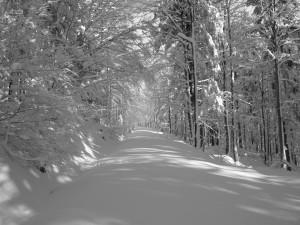 Bayerwald Schneeschuhwandern Mauth Finsterau
