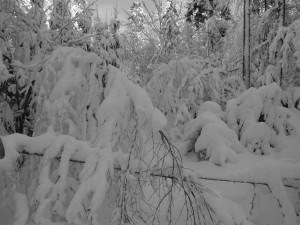Mauth FInsterau Schneeschuhwandern im Bayerischen Wald