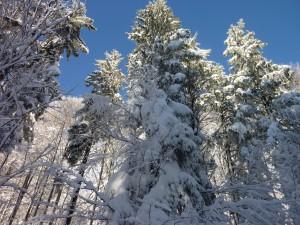 Schneeschuhwanderung im Bayerischen Wald