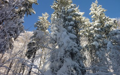 Auf Schneeschuhen durch die Waldwildnis