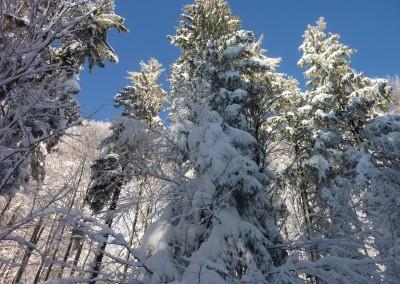 Bayerischer Wald Schneeschuh Wanderung