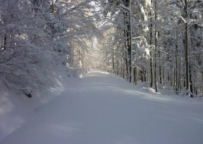 Bayerischer Wald Schneeschuhtour