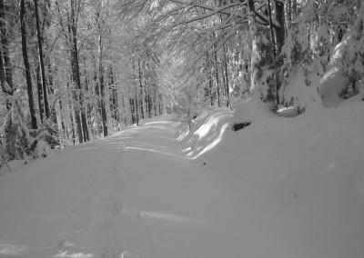 Schneeschuh Wandern im Bayerwald