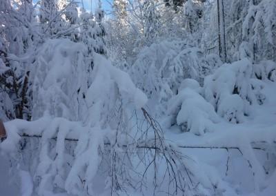 Schneeschuhwandern bei Mauth im Bayerischen Wald
