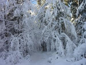 Bayerwald Schneeschuhwandern Winter