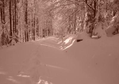 Gehen mit Schneeschuhen im Bayerischen Wald