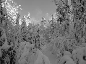 Schneeschuhtour Bayerischer Wald Mauth
